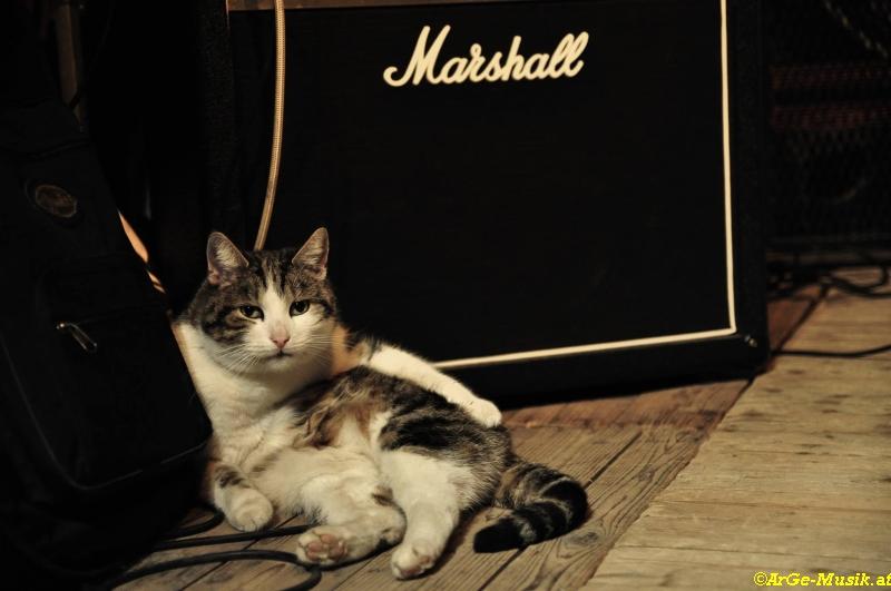 Rocknrollcat